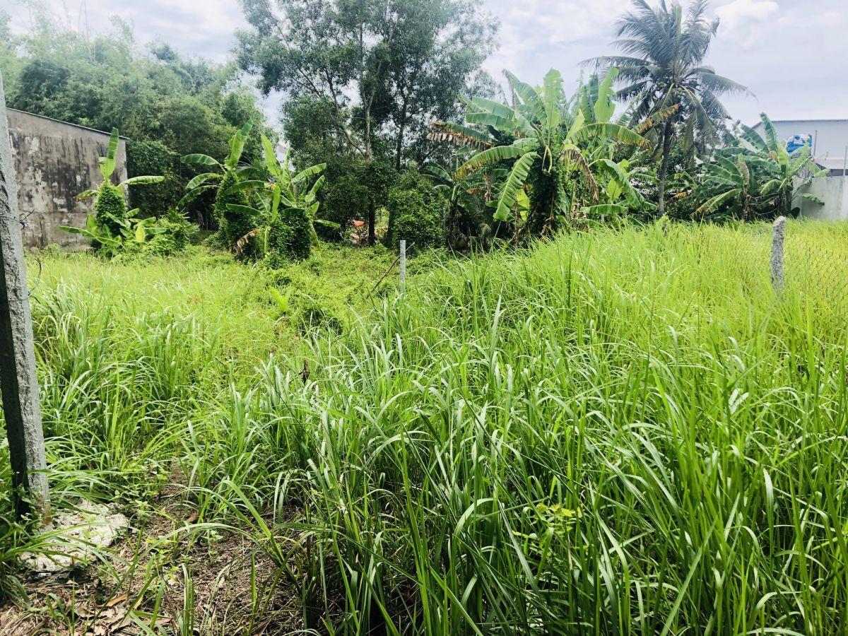 Đất Nguyễn Cư Trinh nối dài